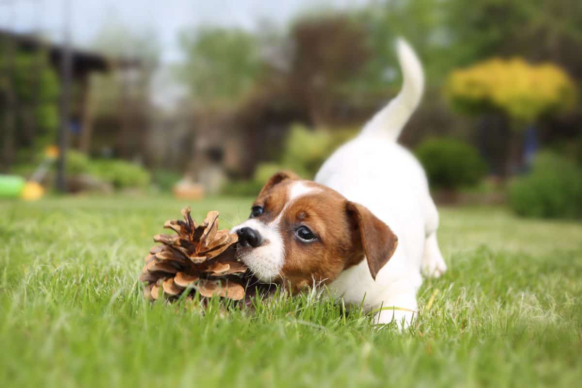 Raising a Social Puppy