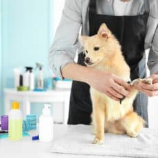 Do dog groomers need to be licensed?