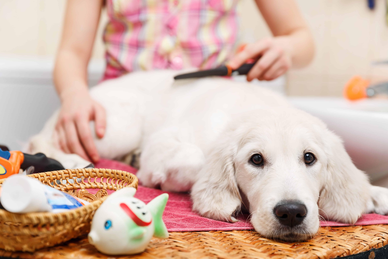 average dog groomer salary