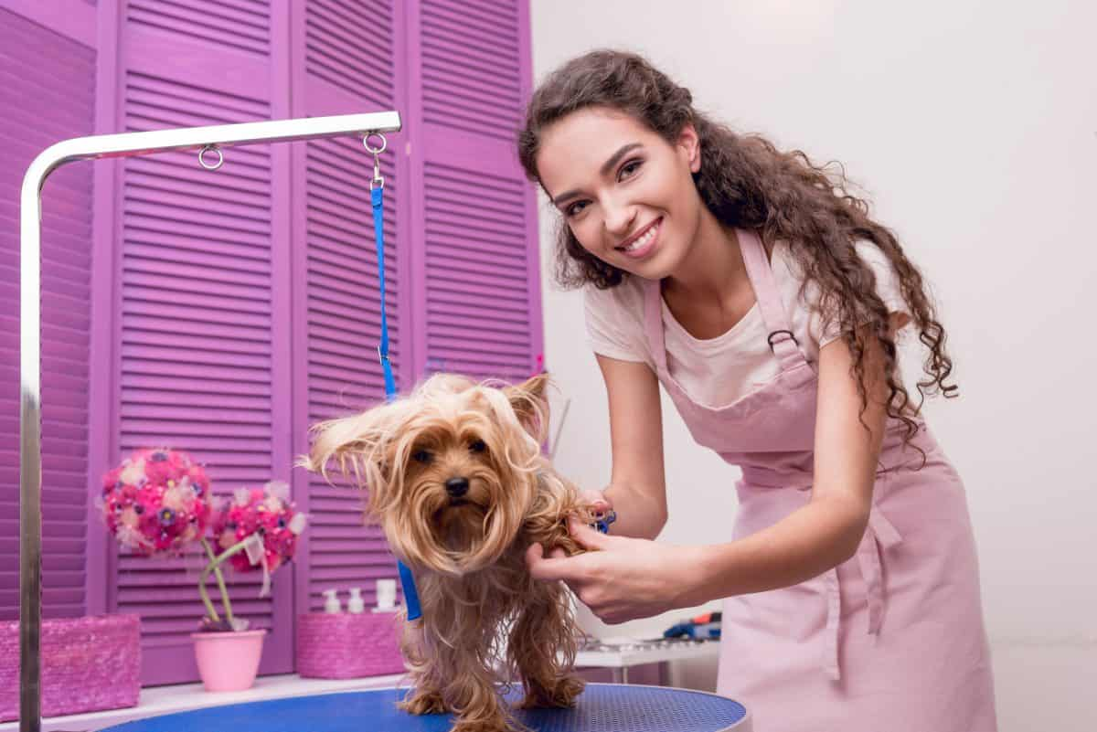 How To Become A Dog Groomer