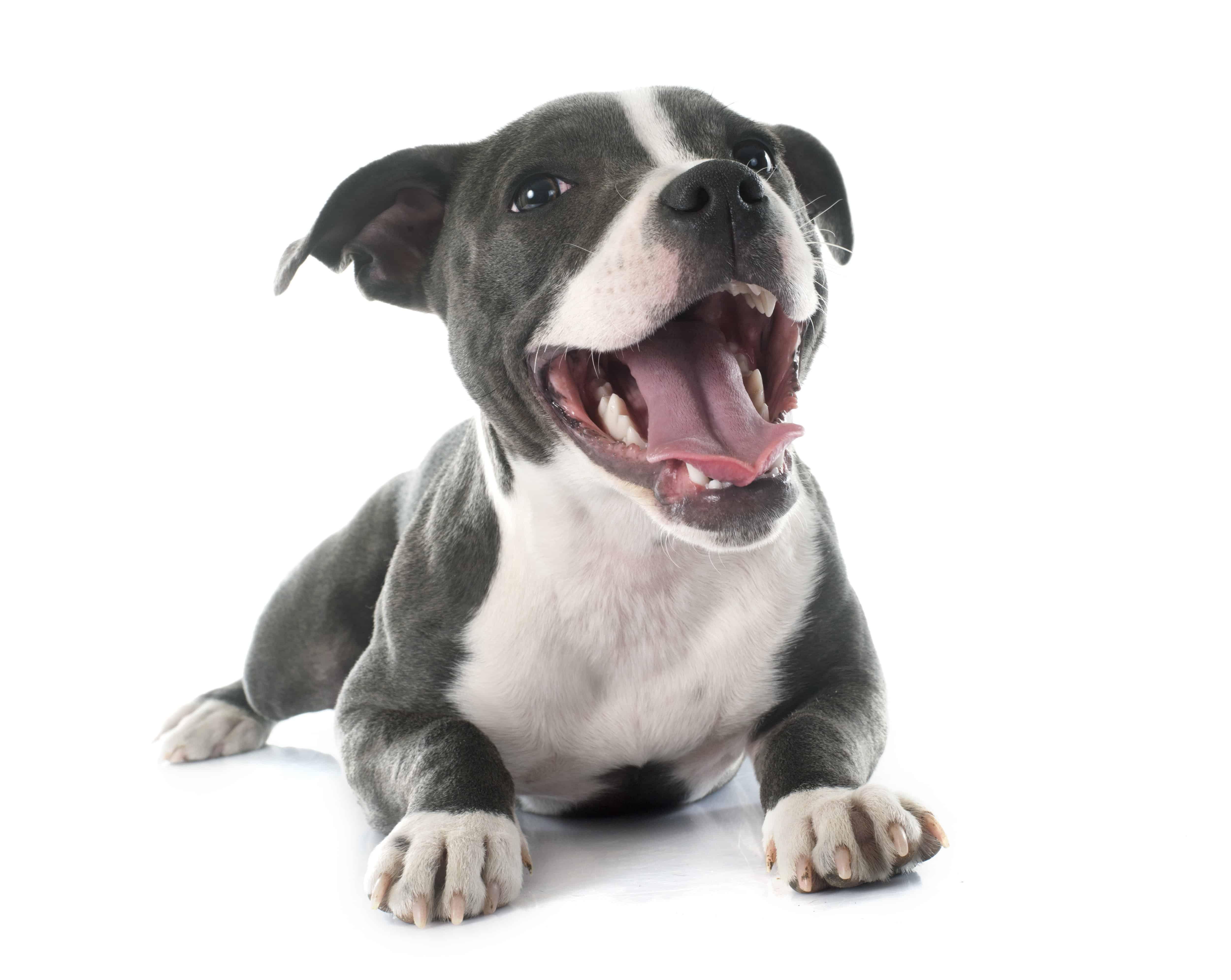 Pet Empowerment Pledge