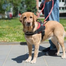 Service Dog vs Therapy Dog: What Is The Difference?