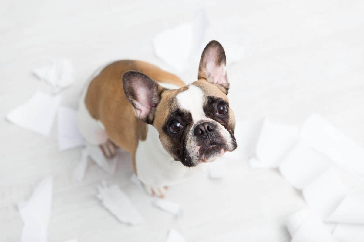 Don't Punish Wanted Behavior, The Academy of Pet Careers