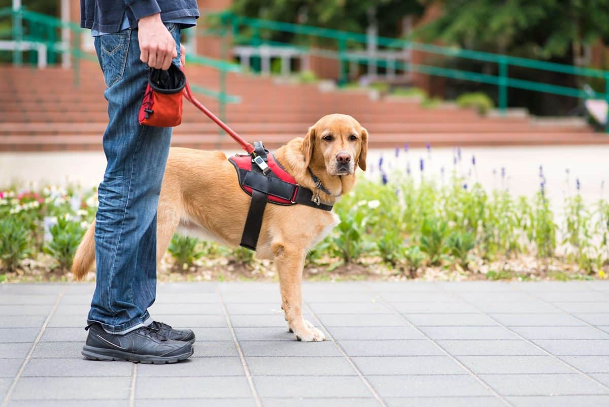 Service Dog Requirements, The Academy of Pet Careers