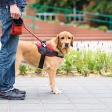 Service Dog Requirements: Can My Dog Be A Service Dog?
