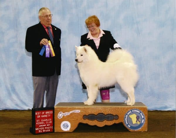 Conformation By Cole Class, The Academy of Pet Careers