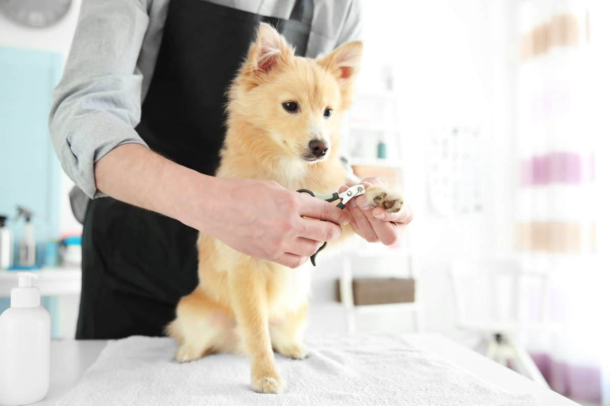 Fear of Nail Trims, The Academy of Pet Careers