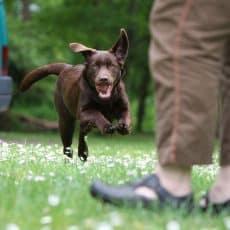 5 Life Saving Skills Every Dog Should Know