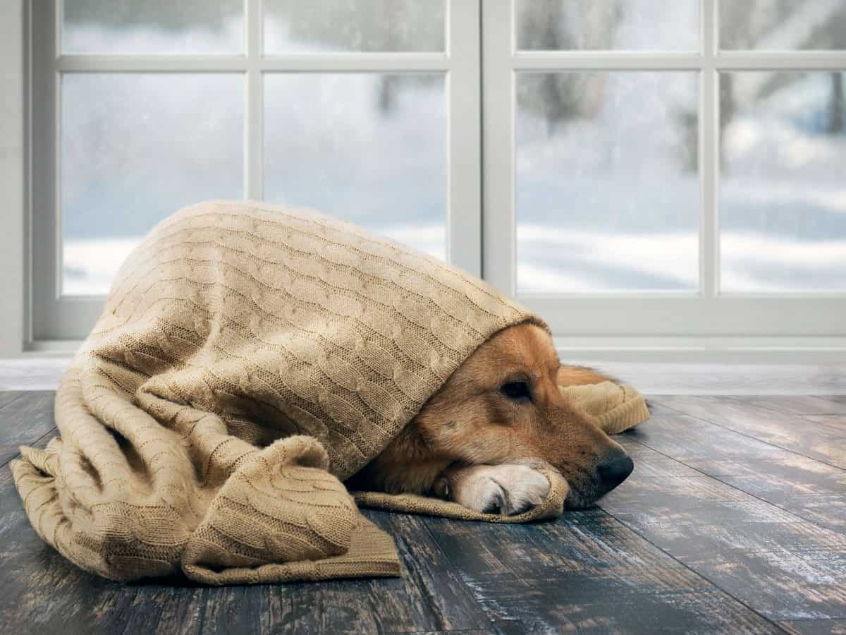 Snow Day Activities For Dogs, The Academy of Pet Careers