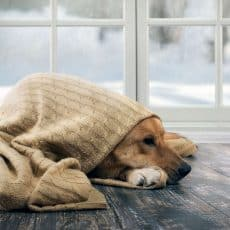 Snow Day Activities For Your Dog