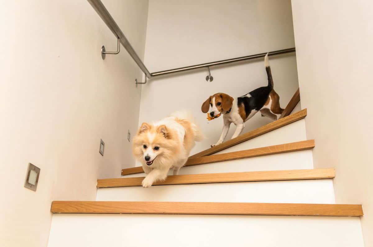 Stair Training, The Academy Of Pet Careers