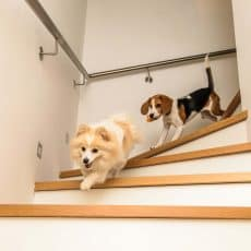 How To Teach Your Dog Stairs