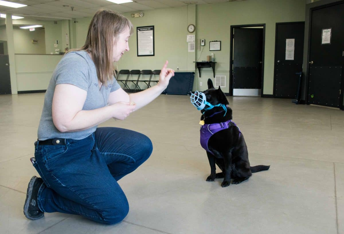 Dog Muzzle, The Academy of Pet Careers