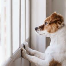 Dog Training Vs. Behavior Modification