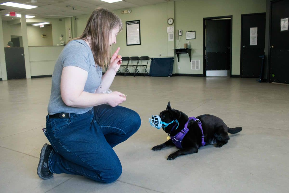 Muzzle Training, The Academy of Pet Careers