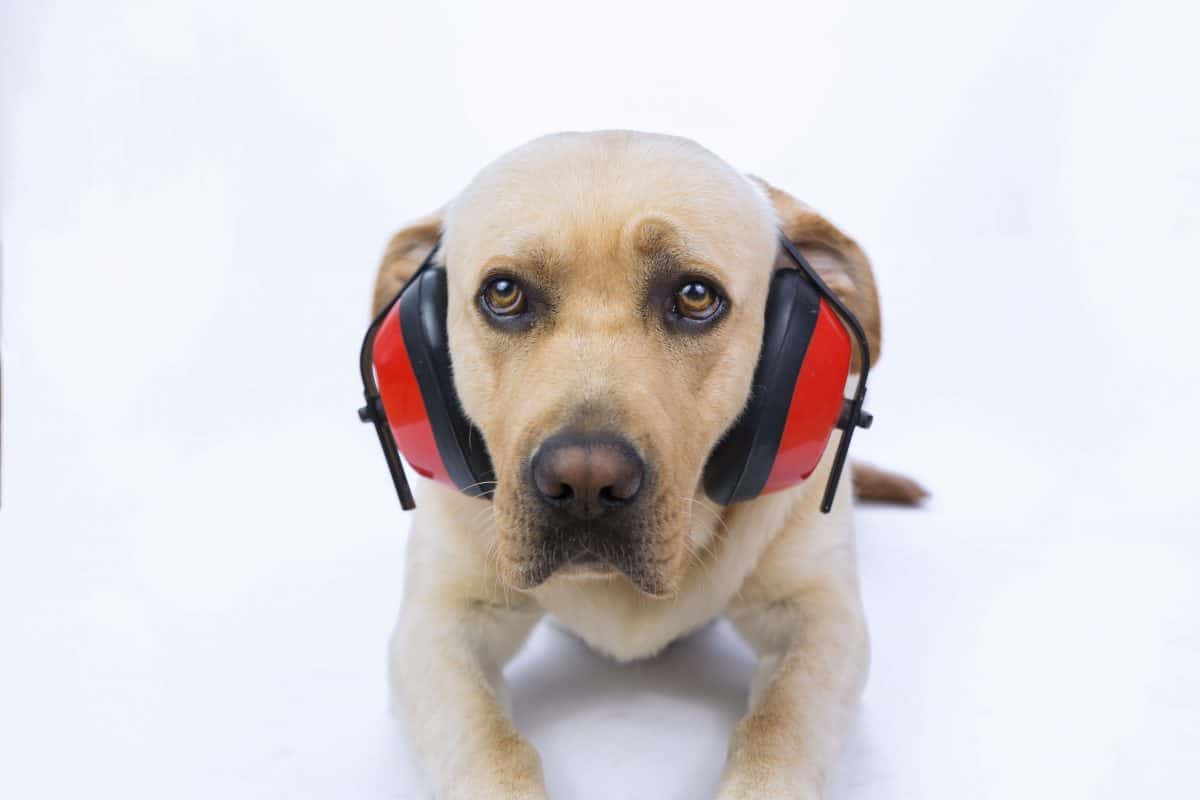Noise Phobia In Dogs, The Academy of Pet Careers