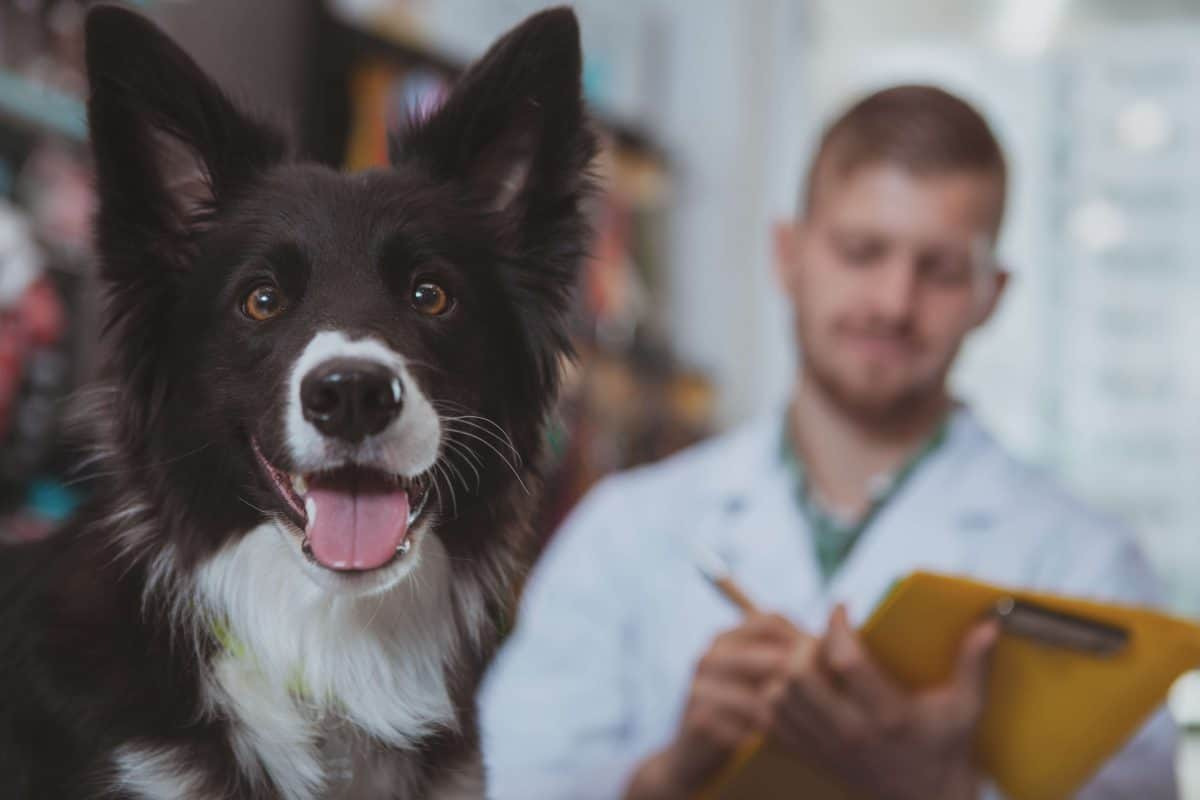 Happy Visits Image, The Academy of Pet Careers