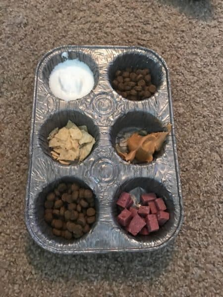 Mealtime Choices Image, The Academy of Pet Careers