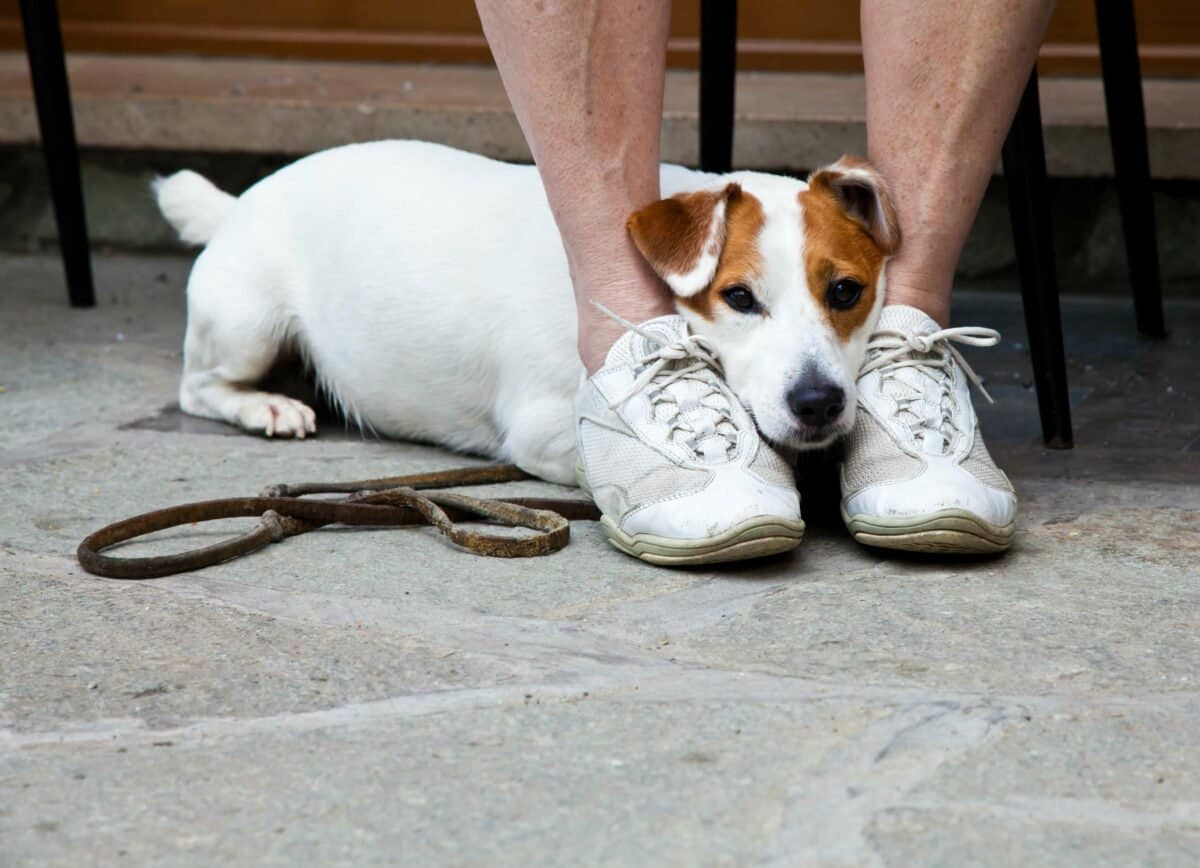 Social Pressure In Dog Training Image, The Academy of Pet Careers