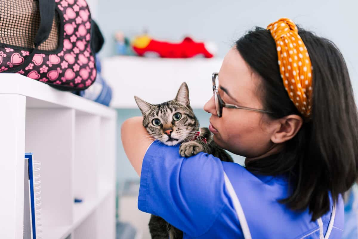 Veterinary Assistant Requirements